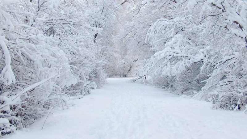 10 Latest Winter Wonderland Wallpaper Hd FULL HD 1080p For PC Desktop 2020 free download 10 latest winter wonderland background pictures full hd 1080p for pc 800x450