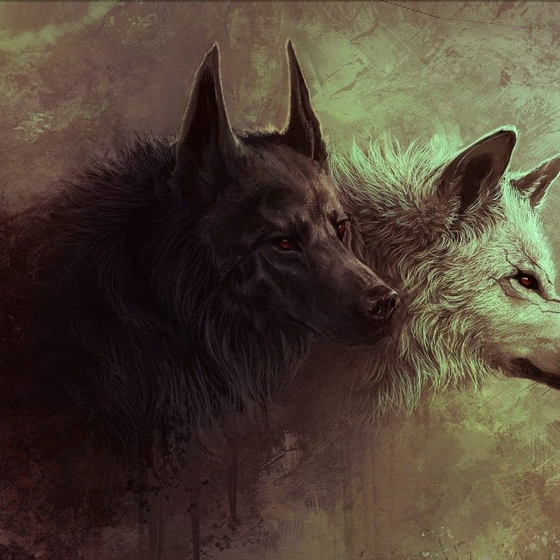 10 Top Black And White Wolves Together Wallpaper FULL HD 1080p For PC Background 2021 free download 10 most popular black and white wolf wallpaper full hd 1080p for pc 800x800