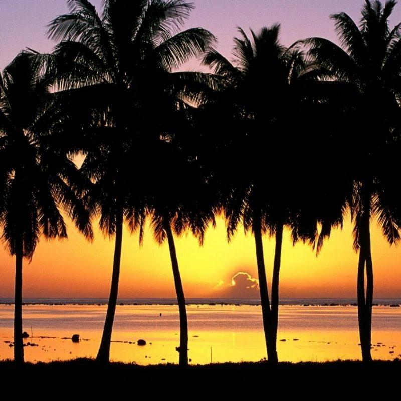 10 Best Palm Trees Desktop Wallpaper FULL HD 1080p For PC Desktop 2018 free download 10 most popular palm trees desktop background full hd 1920x1080 for 800x800