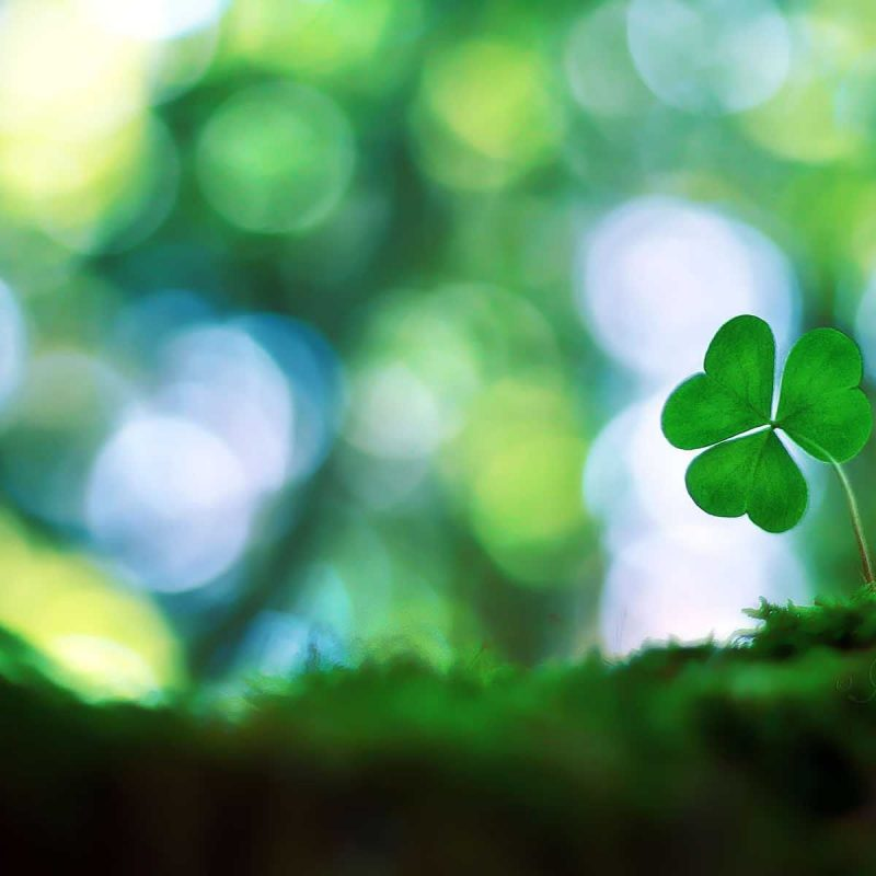 10 Most Popular 4 Leaf Clover Wallpaper FULL HD 1080p For PC Background 2018 free download 1000 images about four leaf clovers on pinterest smiley faces 1 800x800
