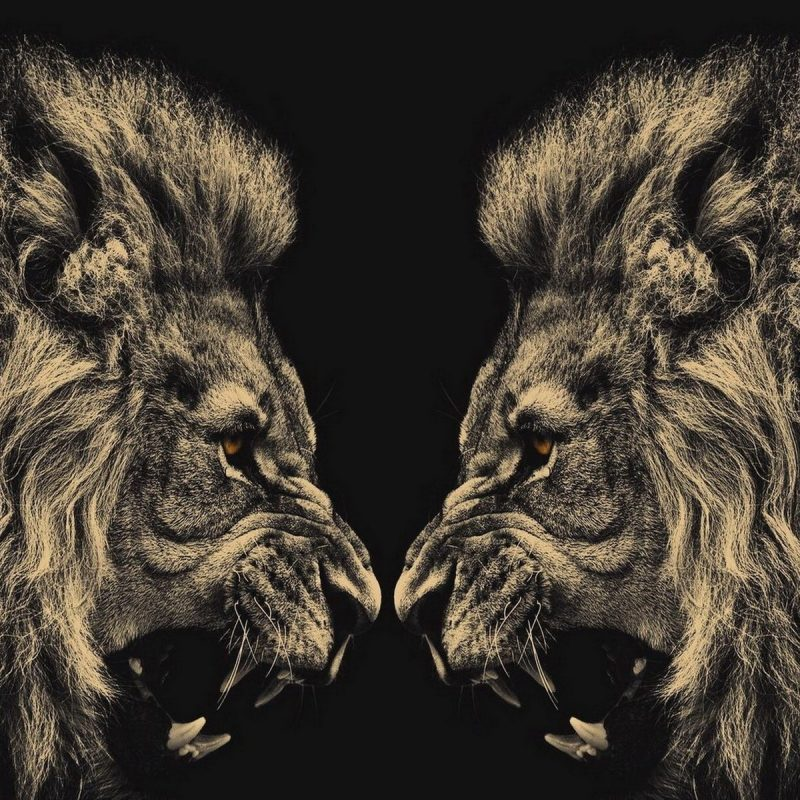10 Most Popular Angry Lion Wallpaper Black And White FULL HD 1080p For PC Desktop 2020 free download 1060 lion hd wallpapers background images wallpaper abyss 800x800
