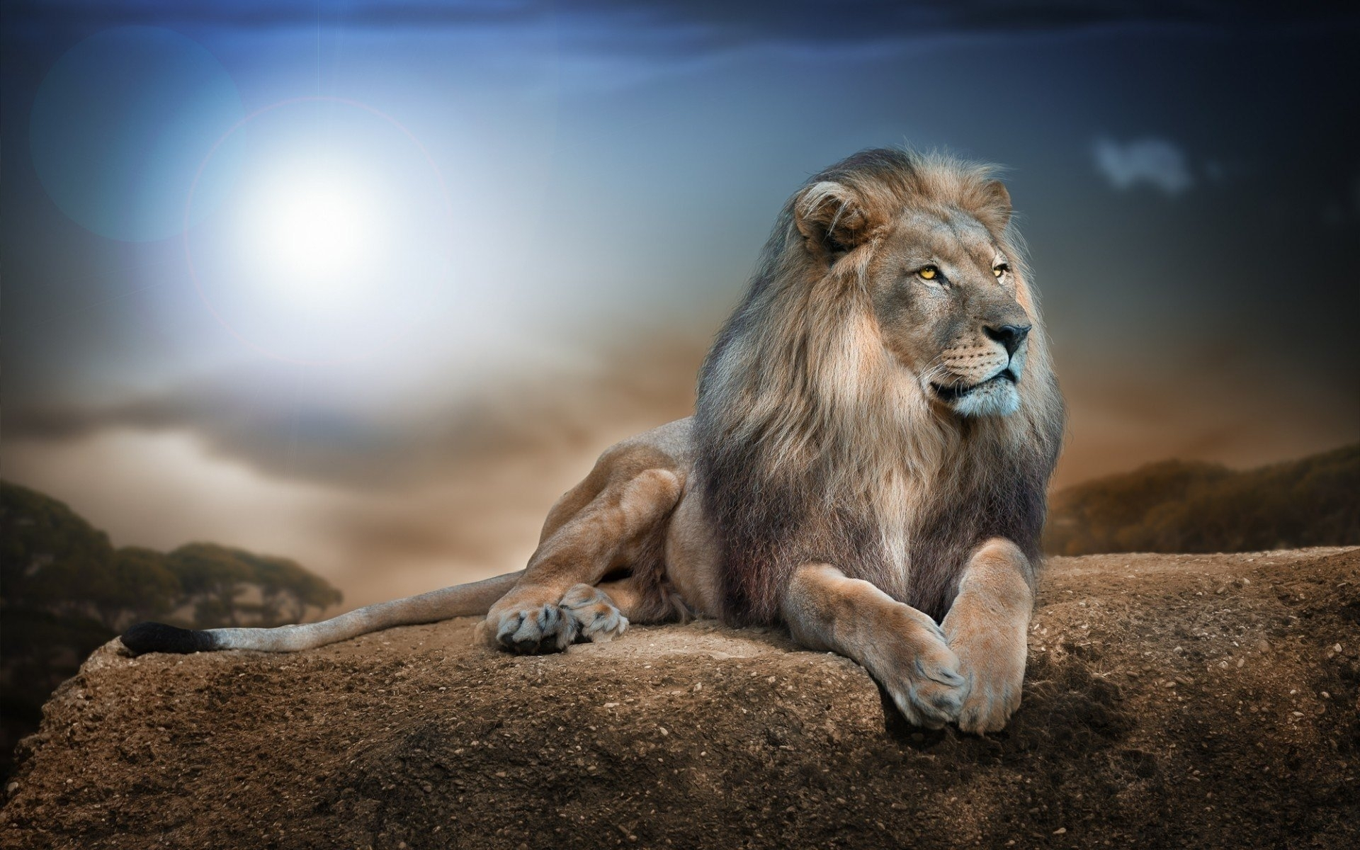 1061 lion hd wallpapers | background images - wallpaper abyss