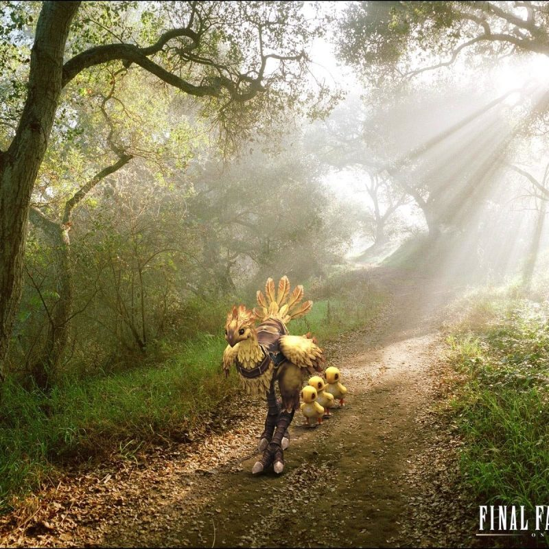 10 Top Final Fantasy Chocobo Wallpaper FULL HD 1080p For PC Desktop 2018 free download 11 chocobo final fantasy hd wallpapers background images 800x800