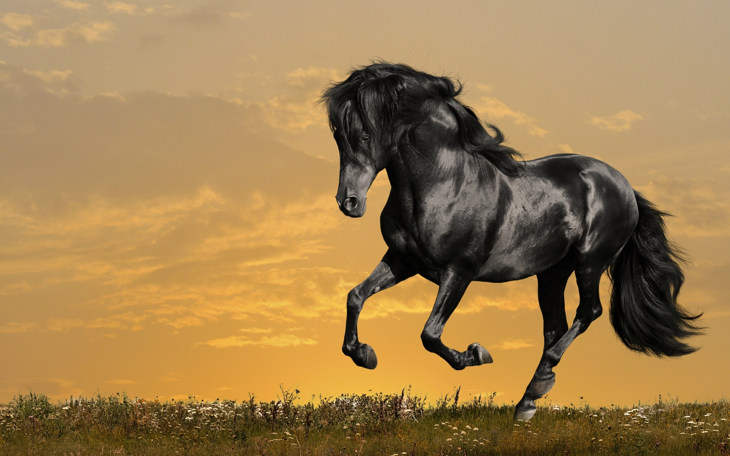 1261 horse hd wallpapers   background images - wallpaper abyss