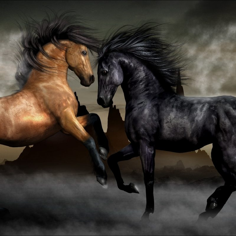 10 Best Horses Pics For Backgrounds FULL HD 1920×1080 For PC Desktop 2021 free download 1261 horse hd wallpapers background images wallpaper abyss 2 800x800