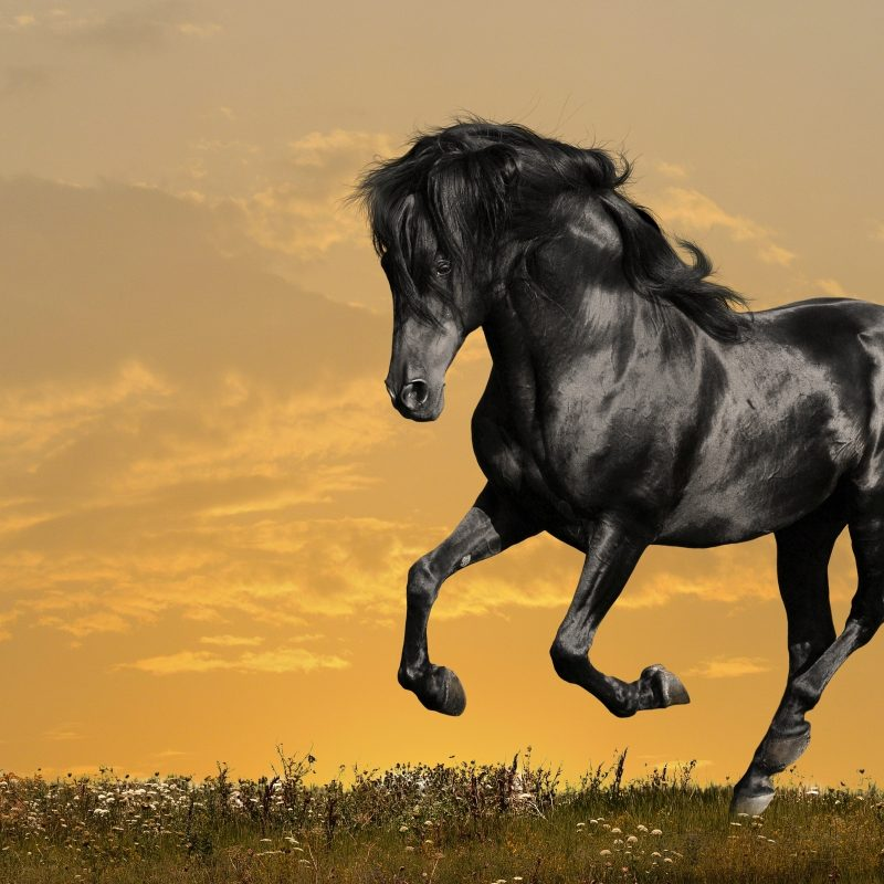 10 Latest Horse Backgrounds For Computers FULL HD 1920×1080 For PC Background 2020 free download 1261 horse hd wallpapers background images wallpaper abyss 800x800