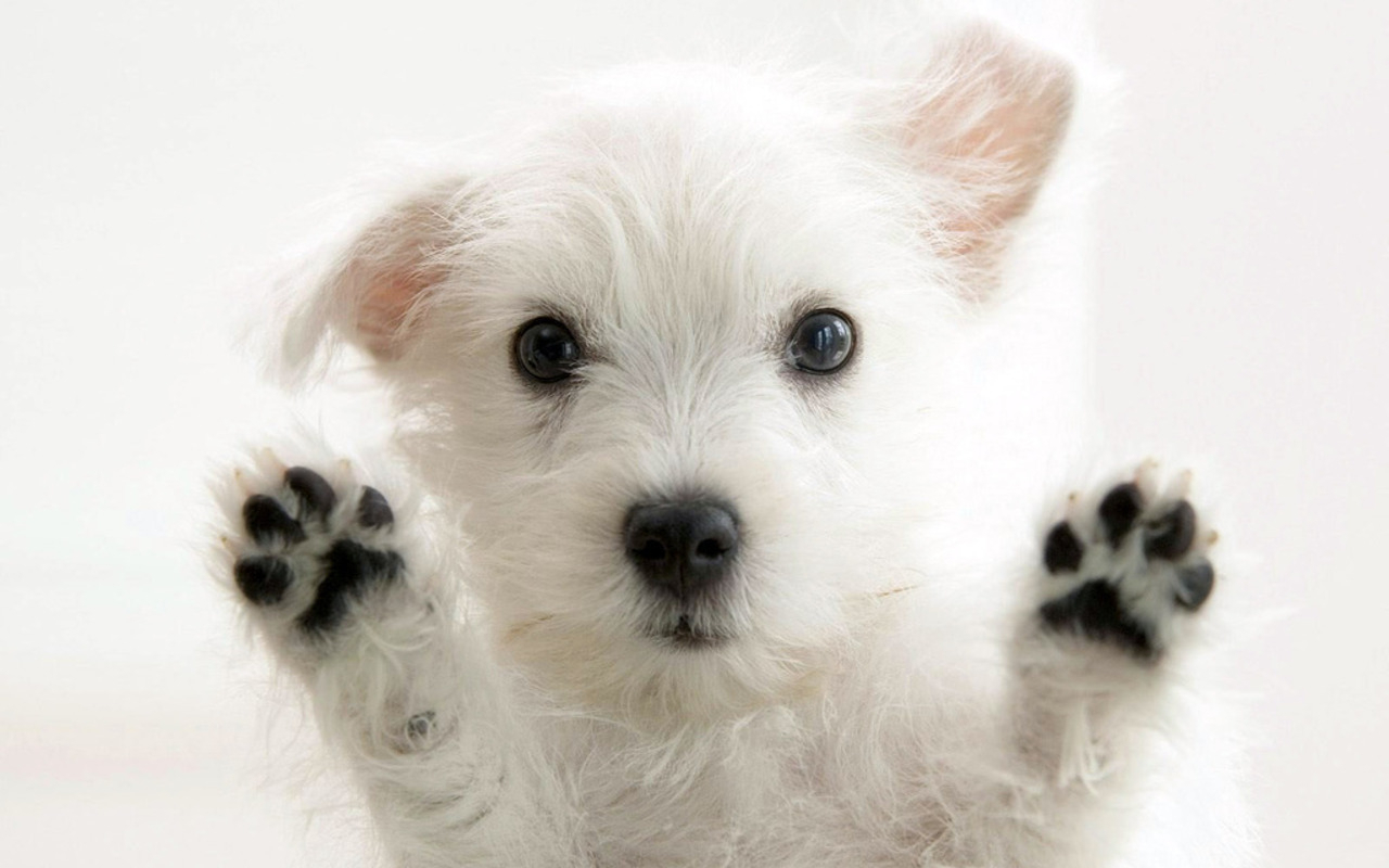 1280x800px 3d puppy wallpaper - wallpapersafari