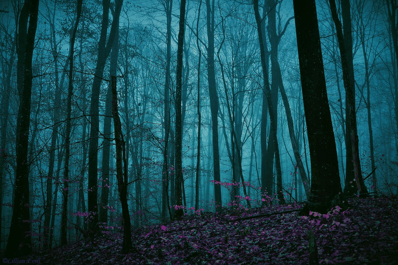 1280x853px enchanted forest background - wallpapersafari