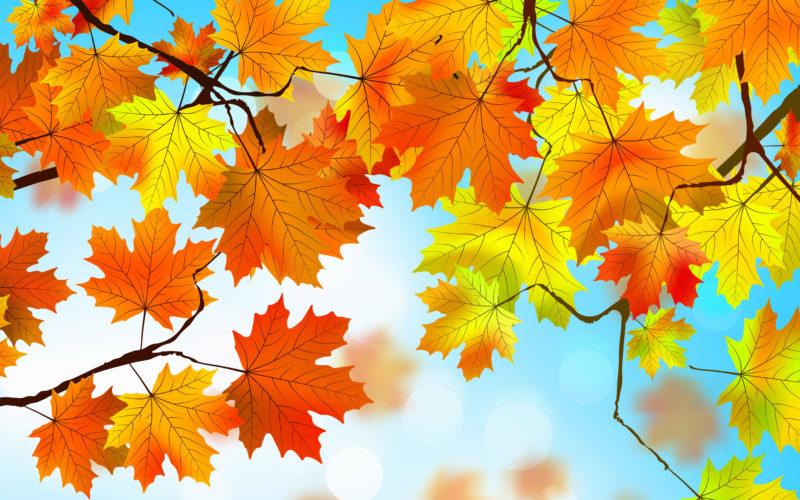 10 Latest Hd Fall Leaves Wallpaper FULL HD 1920×1080 For PC Desktop 2018 free download 1440x900 autumn leaves hd 1440x900 resolution hd 4k wallpapers 800x500