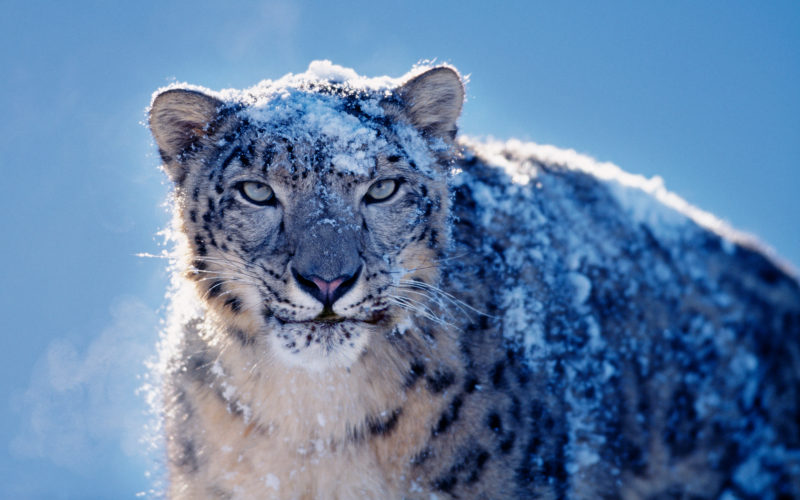 10 Latest Snow Leopard Wallpaper Mac FULL HD 1920×1080 For PC Desktop 2021 free download 1680x1050px mac snow leopard wallpaper wallpapersafari 800x500