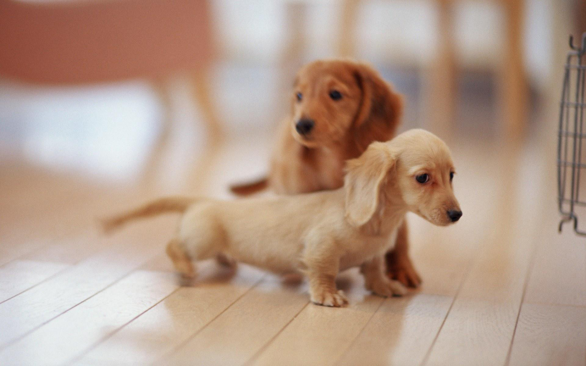 1920x1200px 3d puppy wallpaper - wallpapersafari