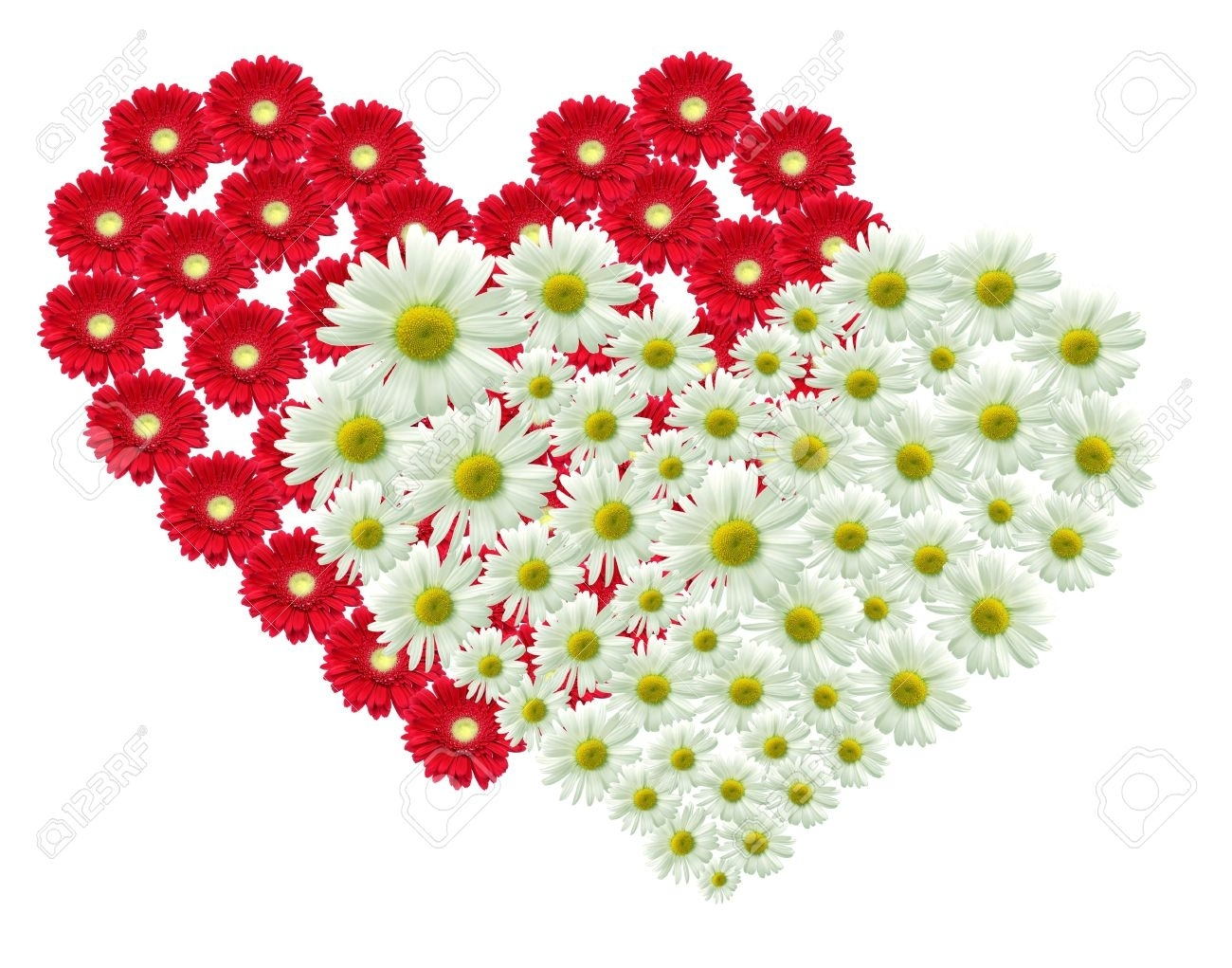 2 big heart made of red and white flowers stock photo, picture and