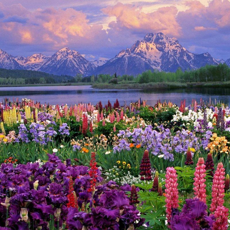 10 New Beautiful Nature Wallpaper Spring FULL HD 1080p For PC Desktop 2021 free download 20 beautiful spring wallpaper 800x800