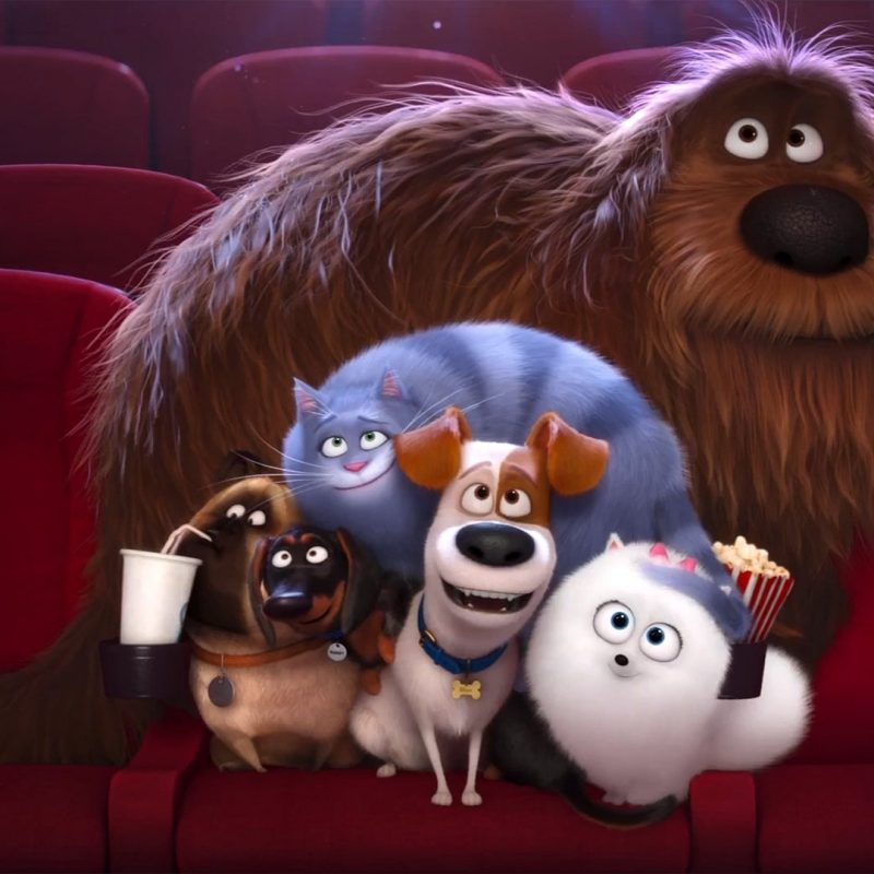10 Most Popular The Secret Life Of Pets Wallpaper FULL HD 1920×1080 For PC Desktop 2018 free download 20 the secret life of pets hd wallpapers background images 800x800