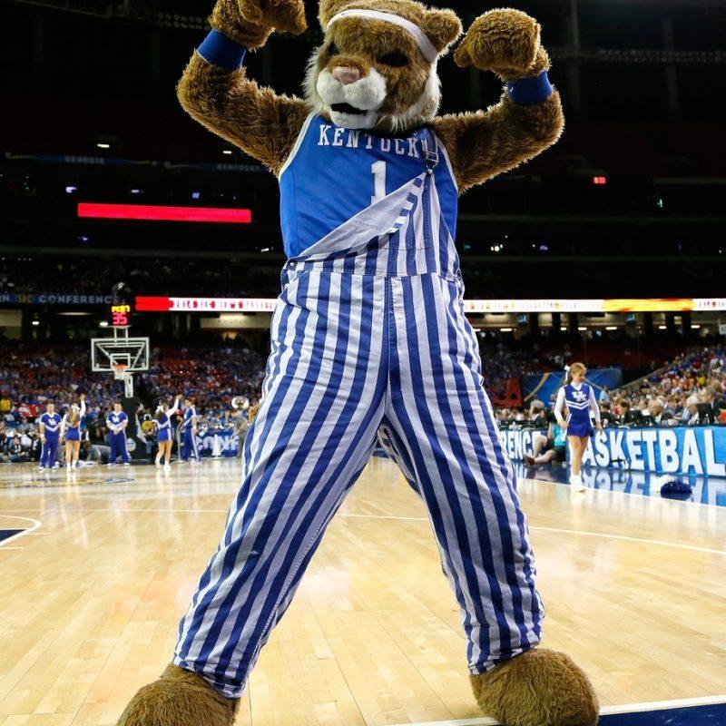 10 New Kentucky Wildcats Mascot Pictures FULL HD 1920×1080 For PC Desktop 2018 free download 2014 ncaa mascot deathbracket midwest region sbnation 800x800