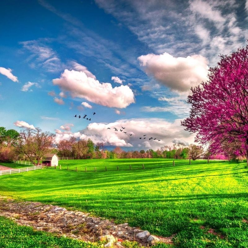 10 Latest Computer Backgrounds Nature Spring FULL HD 1080p For PC Background 2021 free download 2026 spring desktop backgrounds 800x800