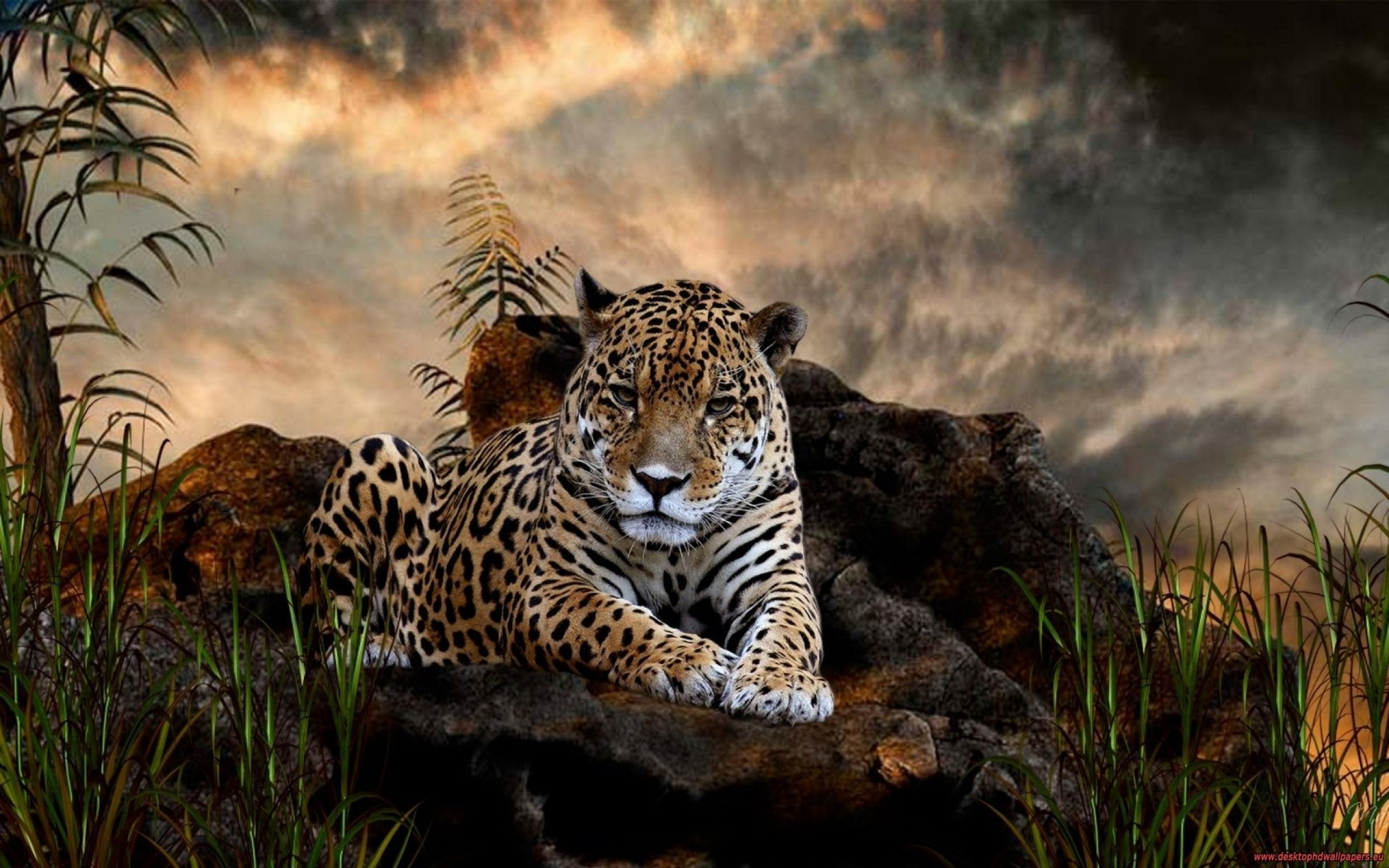 208 jaguar hd wallpapers | background images - wallpaper abyss