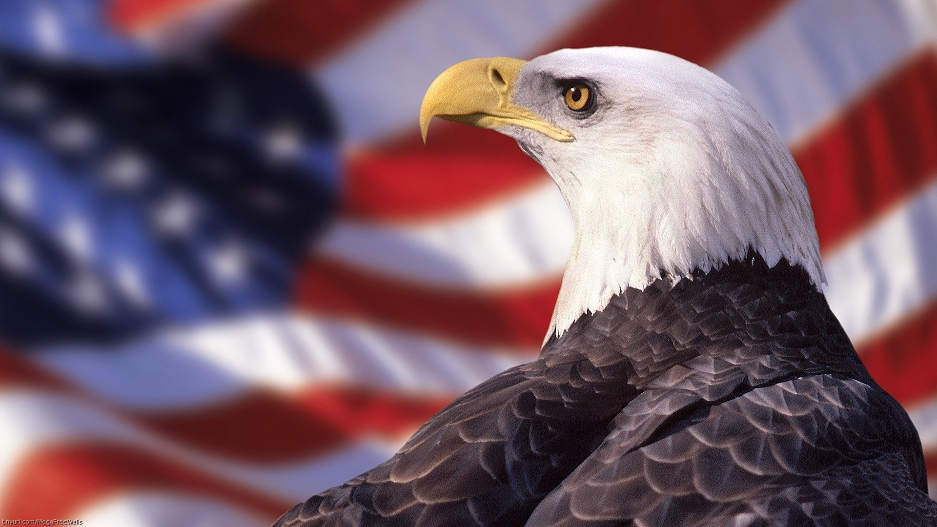 231 bald eagle hd wallpapers | background images - wallpaper abyss