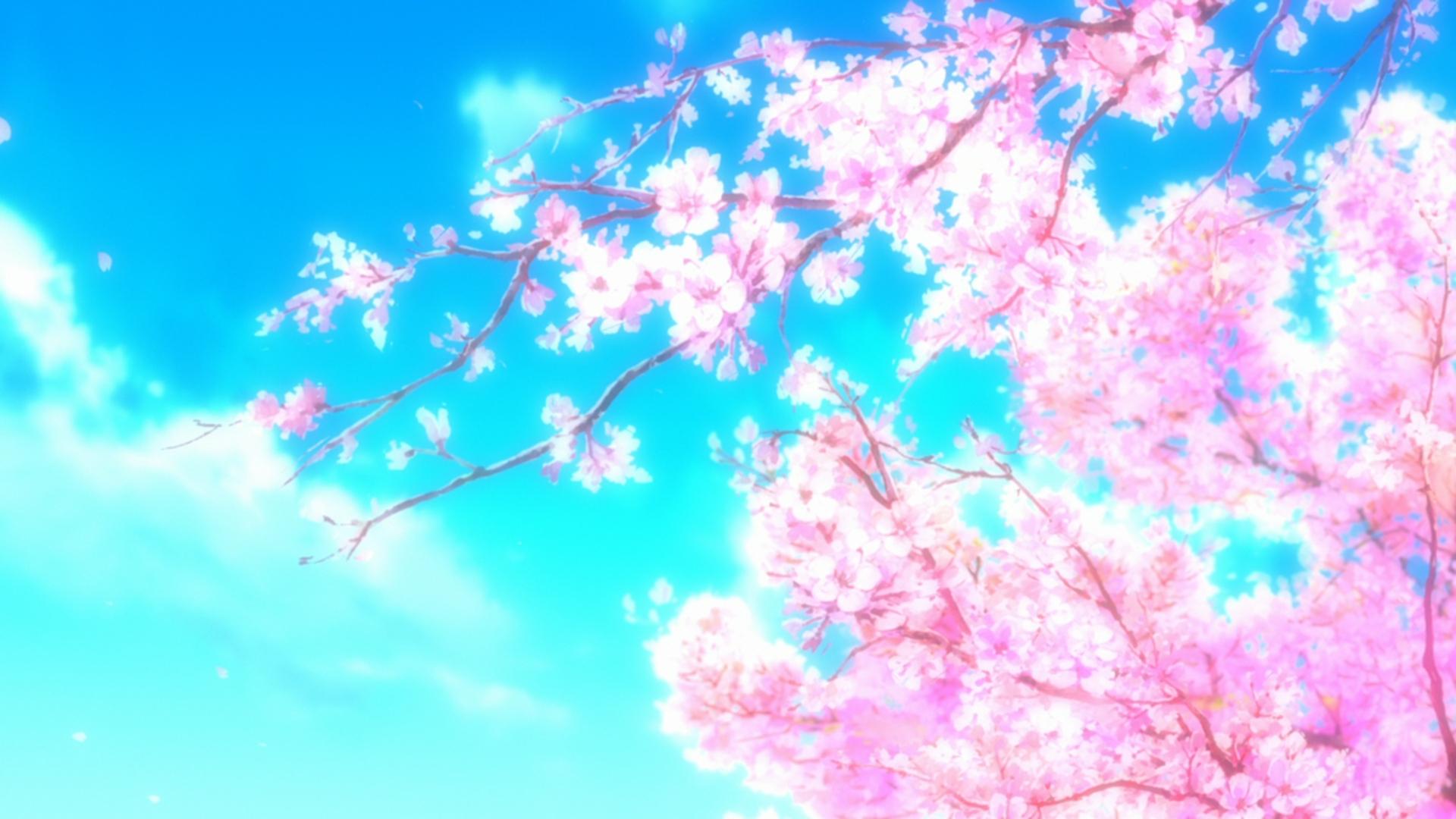233 cherry blossom fonds d'écran hd | arrière-plans - wallpaper abyss