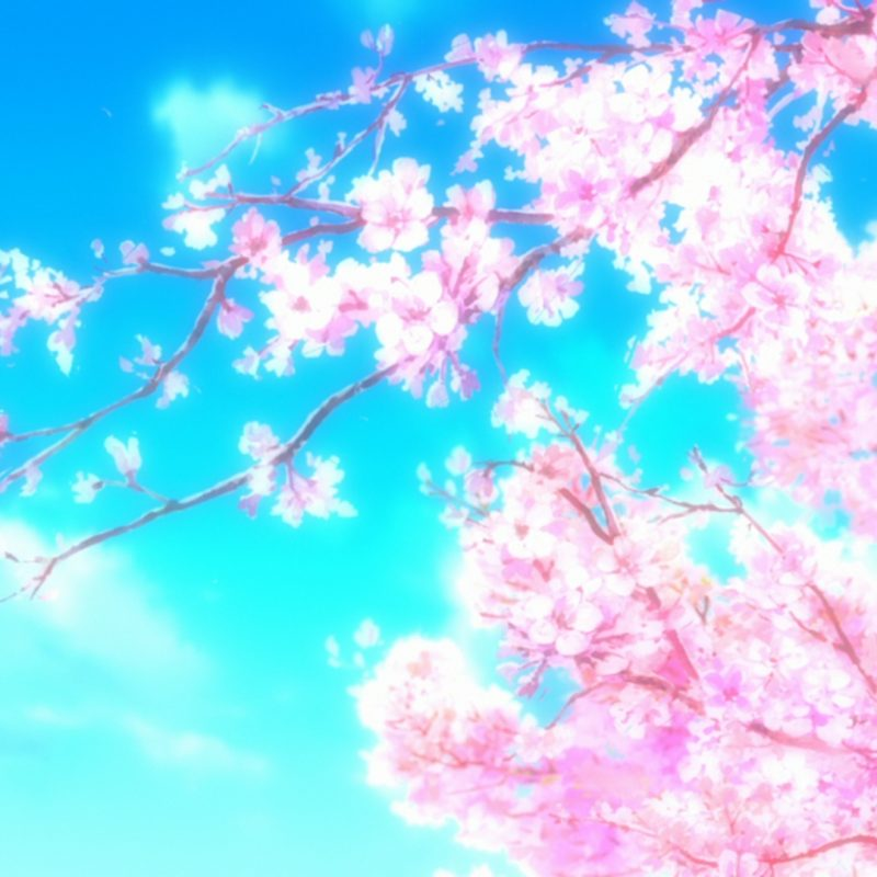 10 Most Popular Cherry Blossom Wallpaper Anime FULL HD 1920×1080 For PC Desktop 2018 free download 233 cherry blossom fonds decran hd arriere plans wallpaper abyss 800x800
