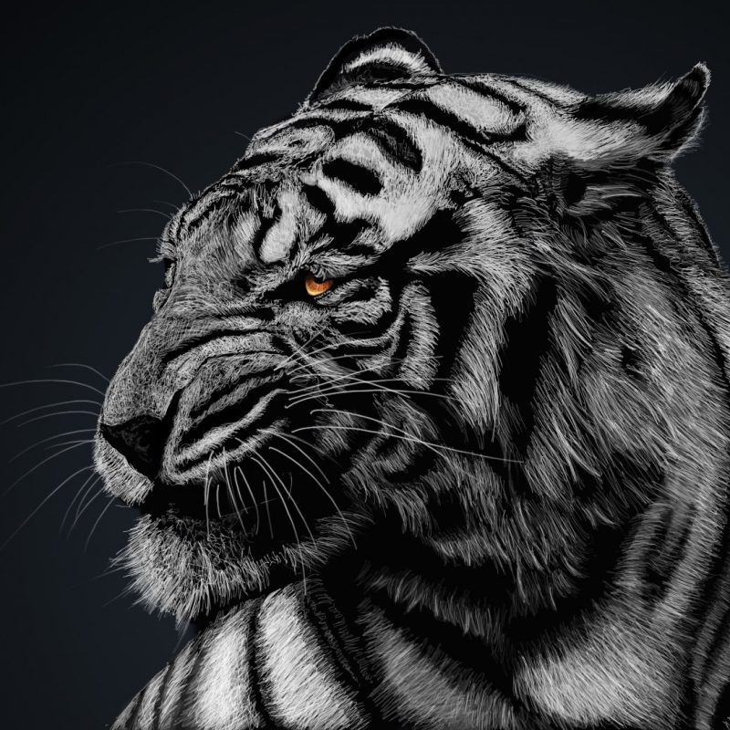 10 Top White Tiger Hd Wallpapers 1080P FULL HD 1080p For PC Background 2018 free download 234 white tiger hd wallpapers background images wallpaper abyss 1 800x800