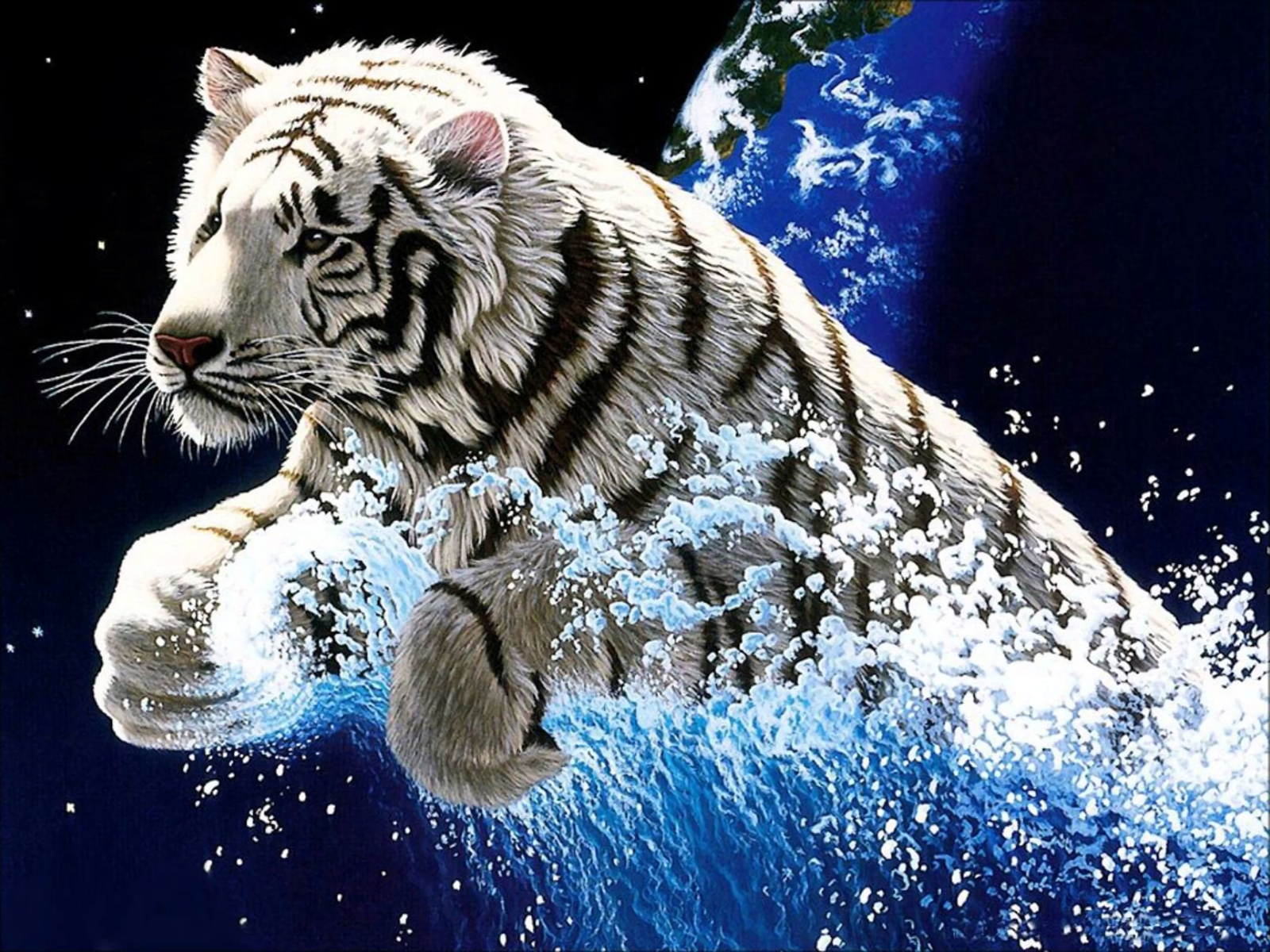 234 white tiger hd wallpapers | background images - wallpaper abyss