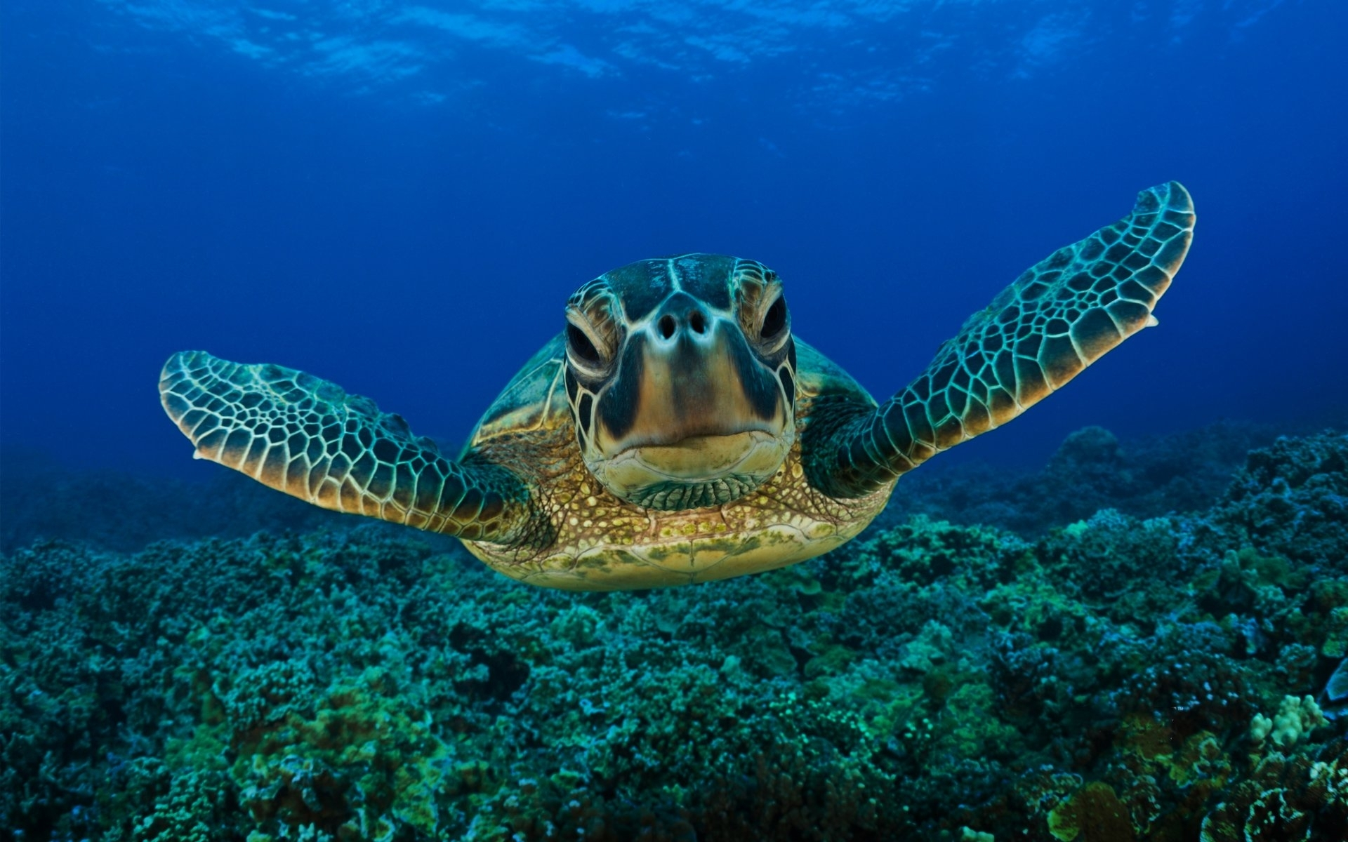 244 turtle hd wallpapers | background images - wallpaper abyss