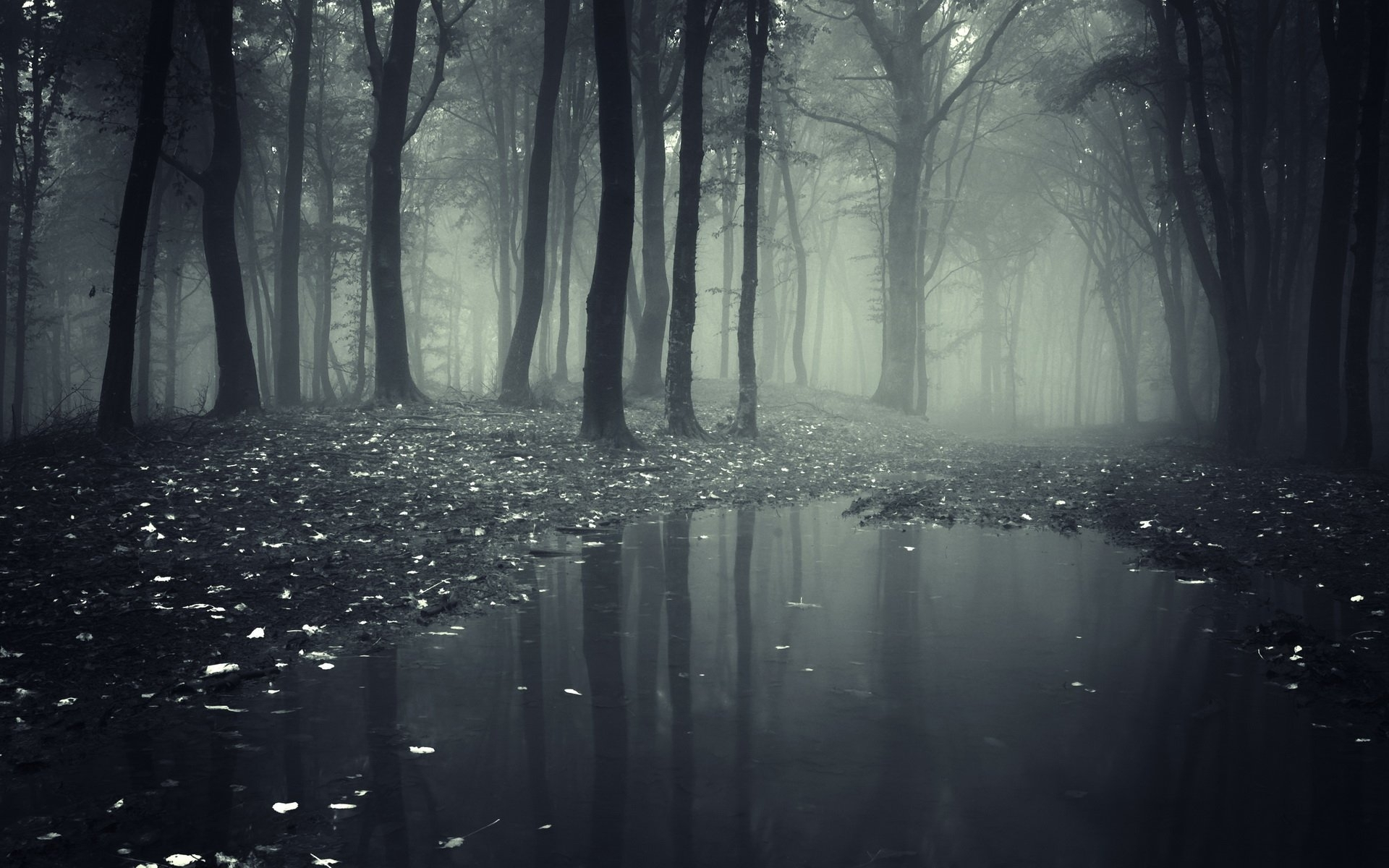 25 forest hd wallpapers   background images - wallpaper abyss