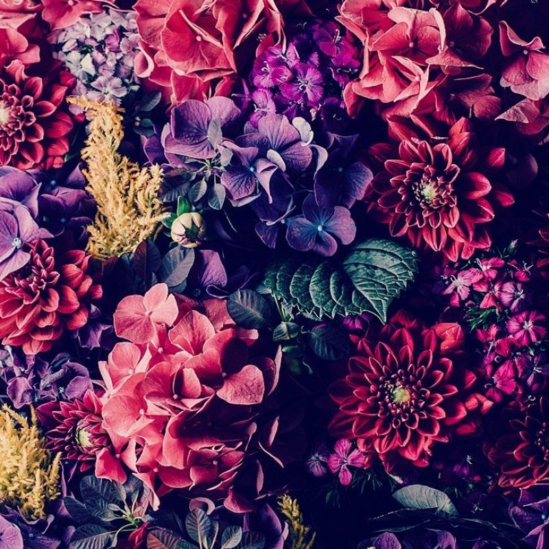 10 Best Vintage Flower Wallpaper For Iphone FULL HD 1920×1080 For PC Background 2021 free download 25 gorgeous iphone 7 7 plus wallpapers taps wallpaper and phone 800x800