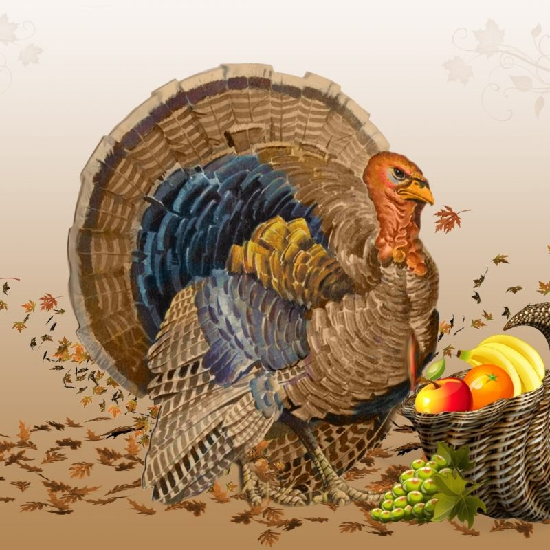 10 New Turkeys For Thanksgiving Wallpaper FULL HD 1080p For PC Desktop 2018 free download 25 happy thanksgiving day 2012 hd wallpapers 800x800