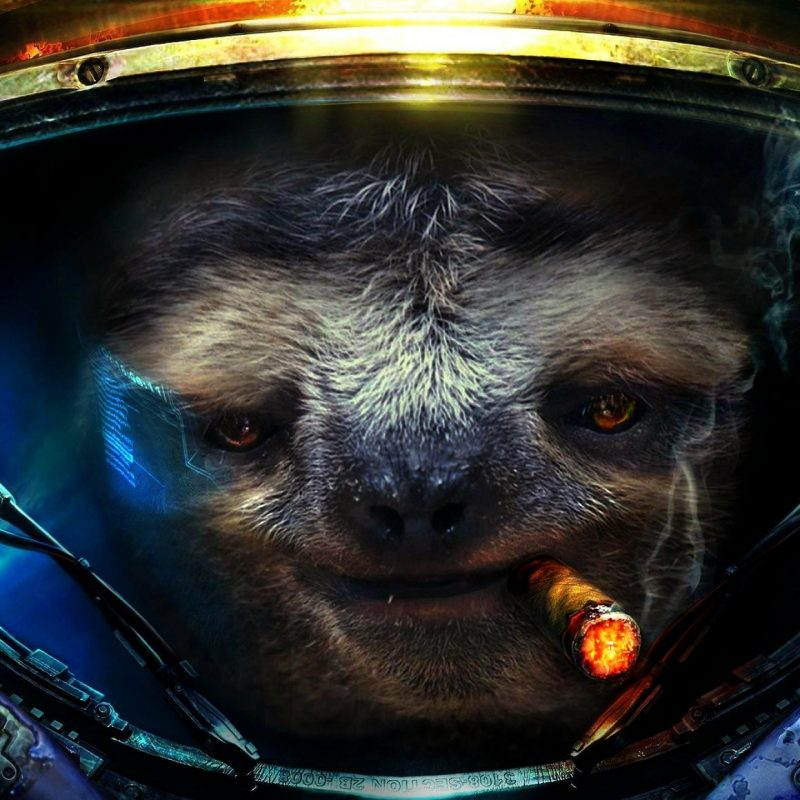10 Latest Space Sloth Wallpaper FULL HD 1920×1080 For PC Desktop 2018 free download 2560x1440 space sloth wallpaper 800x800