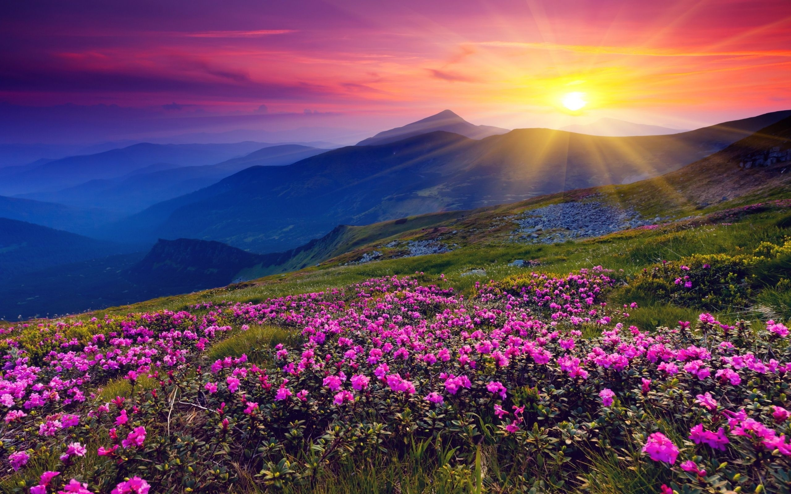 2560x1600 mountains azalea sunset wallpaper | mountain's | pinterest