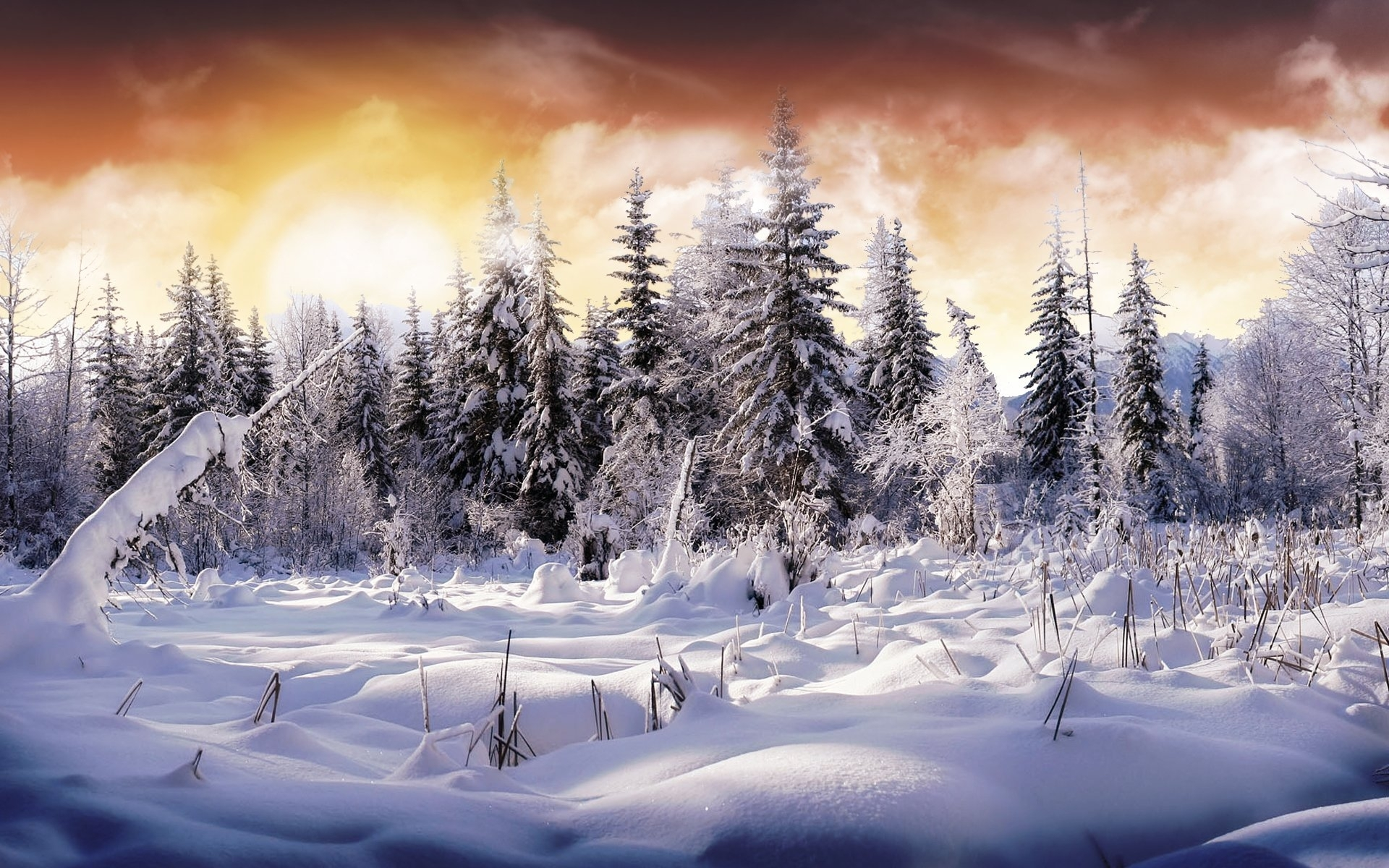 2603 winter hd wallpapers   background images - wallpaper abyss