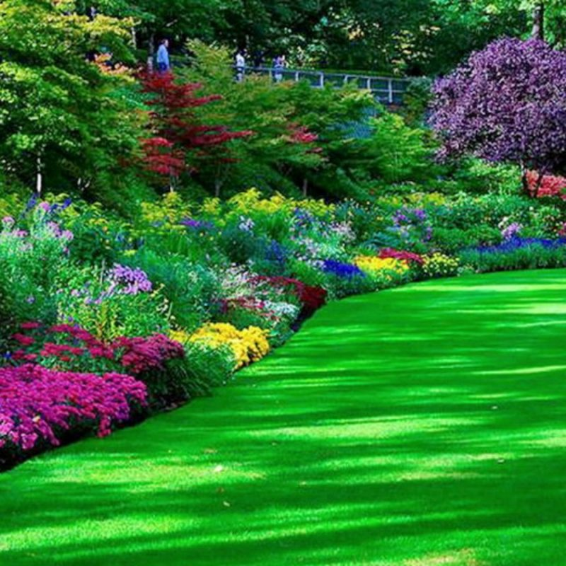 10 Top Garden Pictures For Background FULL HD 1080p For PC Desktop 2018 free download 264 garden hd wallpapers background images wallpaper abyss 800x800