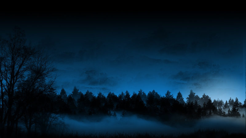 10 Most Popular Night Forest Wallpaper FULL HD 1920×1080 For PC Desktop 2020 free download 27 forest hd wallpapers background images wallpaper abyss 800x450