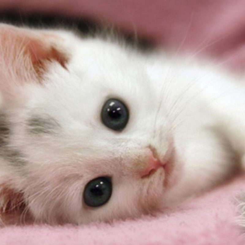 10 New Cute White Cat Pictures FULL HD 1920×1080 For PC Desktop 2020 free download 30 cute and lovely cat wallpapers for desktop 800x800