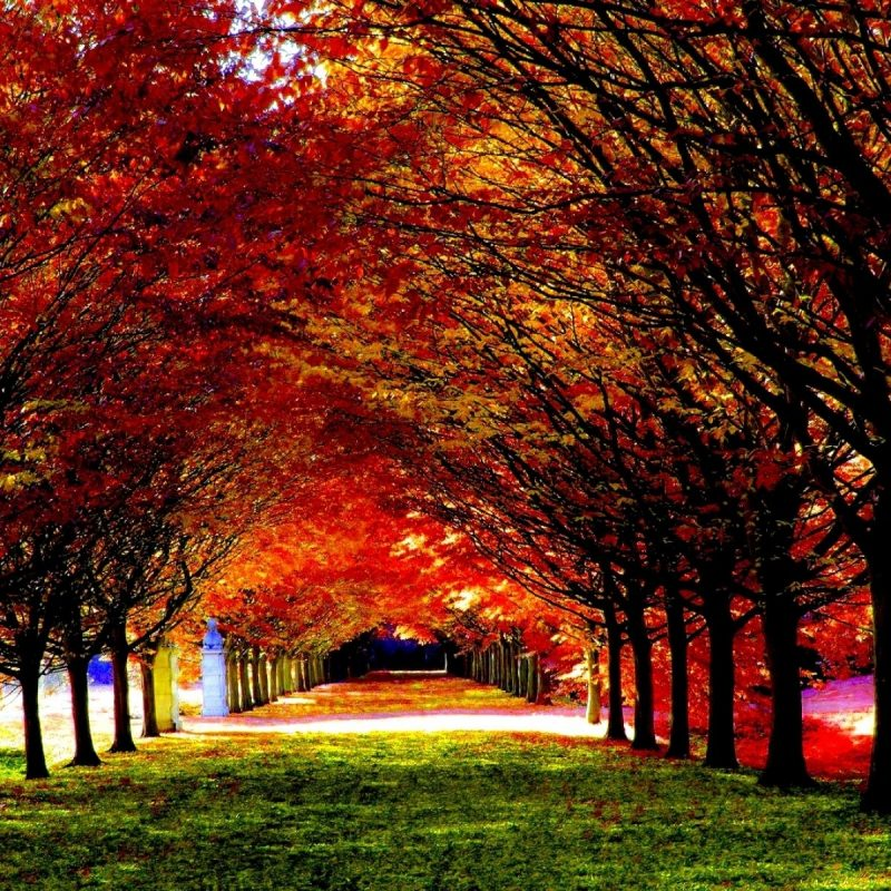 10 Latest Computer Wallpaper Nature Fall FULL HD 1920×1080 For PC Background 2018 free download 30 most beautiful autumn wallpapers hd mixhd wallpapers roads 1 800x800