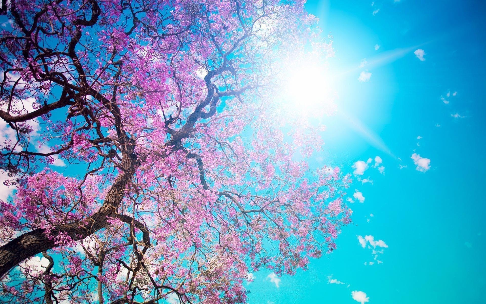 3012 pretty nature backgrounds