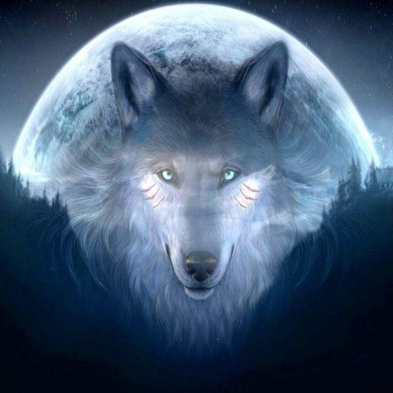 10 New Cool Wallpapers Of Wolves FULL HD 1920×1080 For PC Desktop 2018 free download 3099 cool wallpapers of wolves 800x800