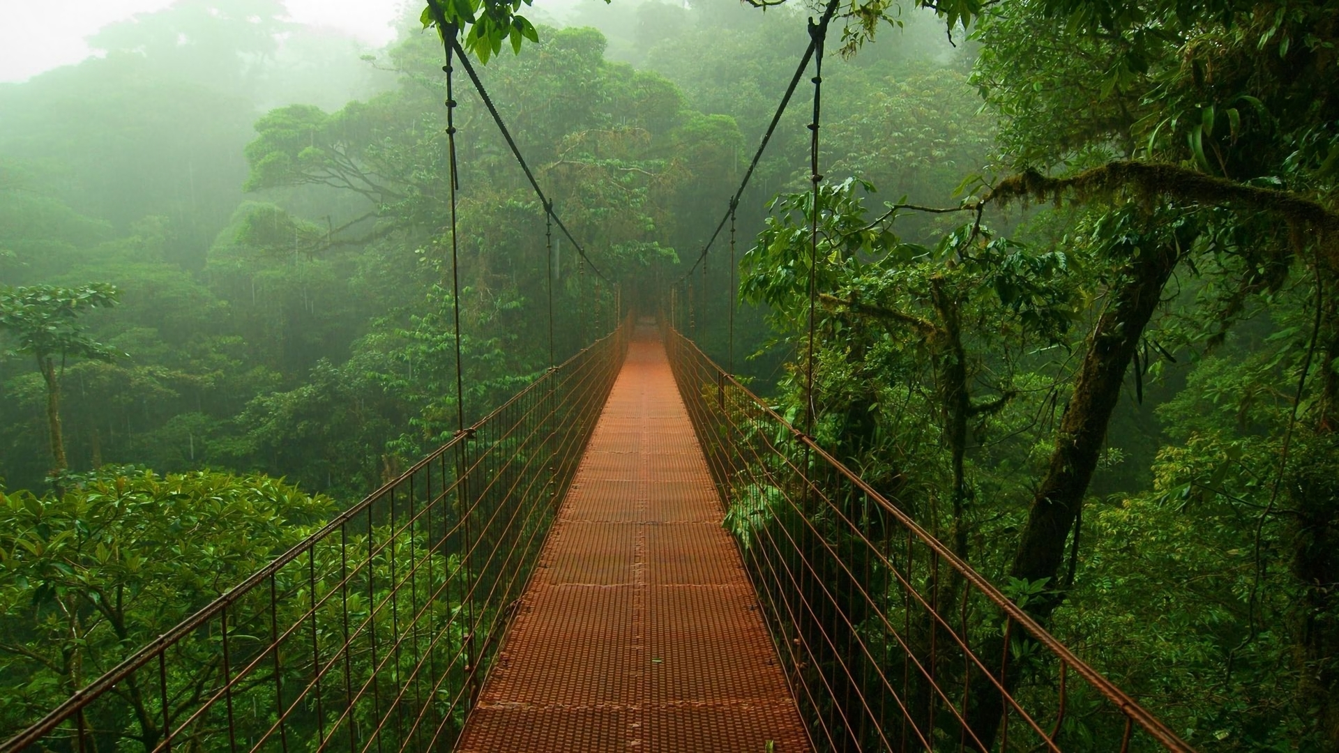 32 rainforest hd wallpapers   background images - wallpaper abyss