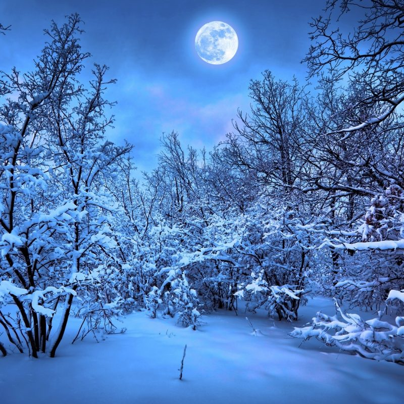 10 Best Snowy Dark Forest Wallpaper FULL HD 1080p For PC Background 2018 free download 3288 snowy night forest wallpaper walops 800x800