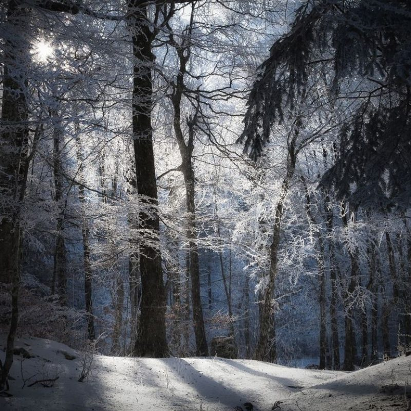 10 Best Snowy Dark Forest Wallpaper Full Hd 1080p For Pc Background
