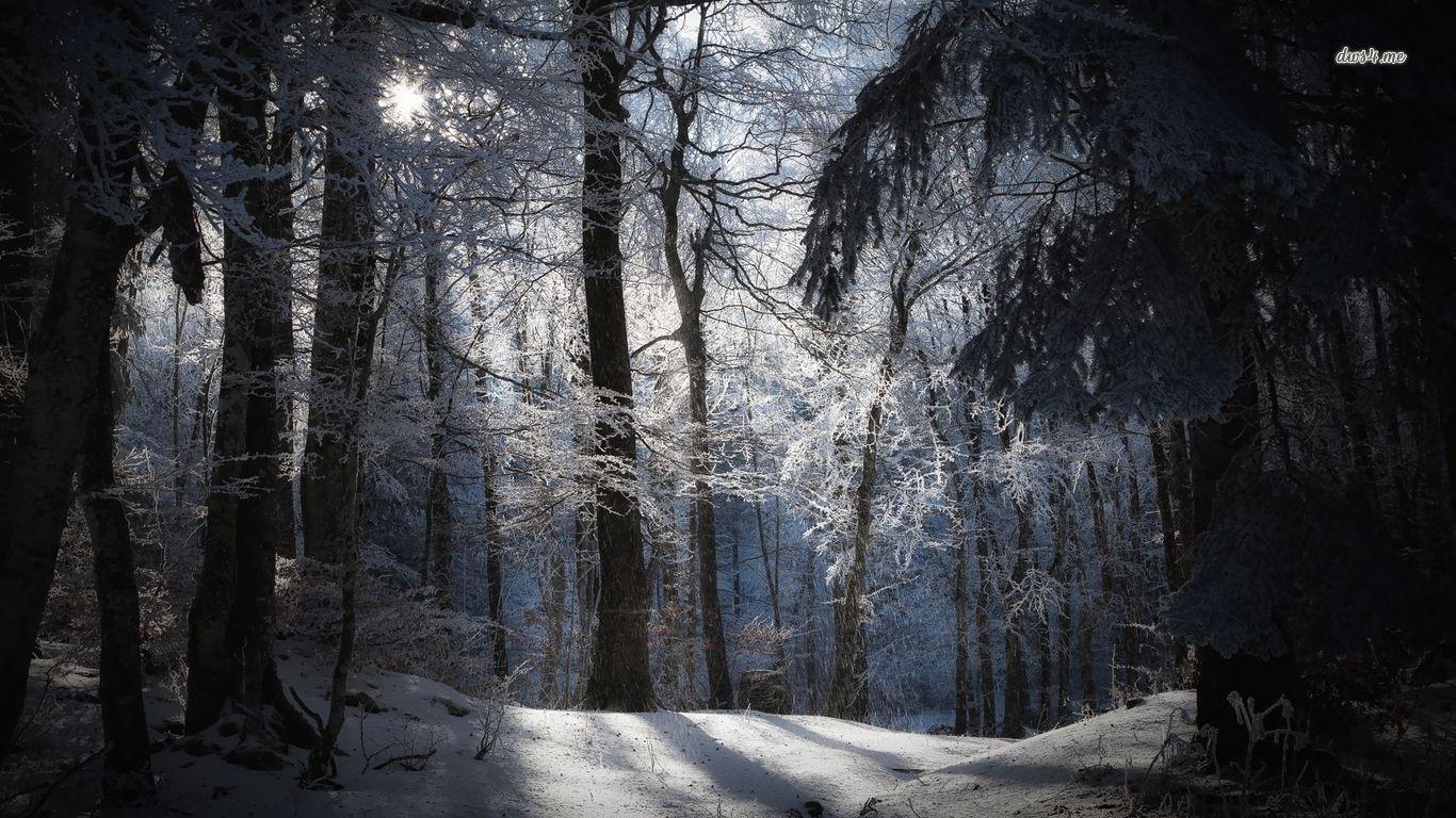 3303) snowy night forest desktop wallpaper - walops