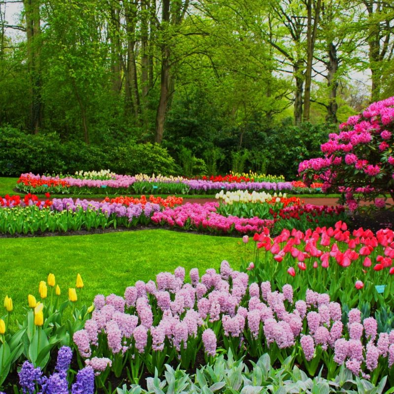 10 New Spring Pictures For Desktop FULL HD 1920×1080 For PC Desktop 2020 free download 35 beautiful spring pictures and wallpapers 800x800