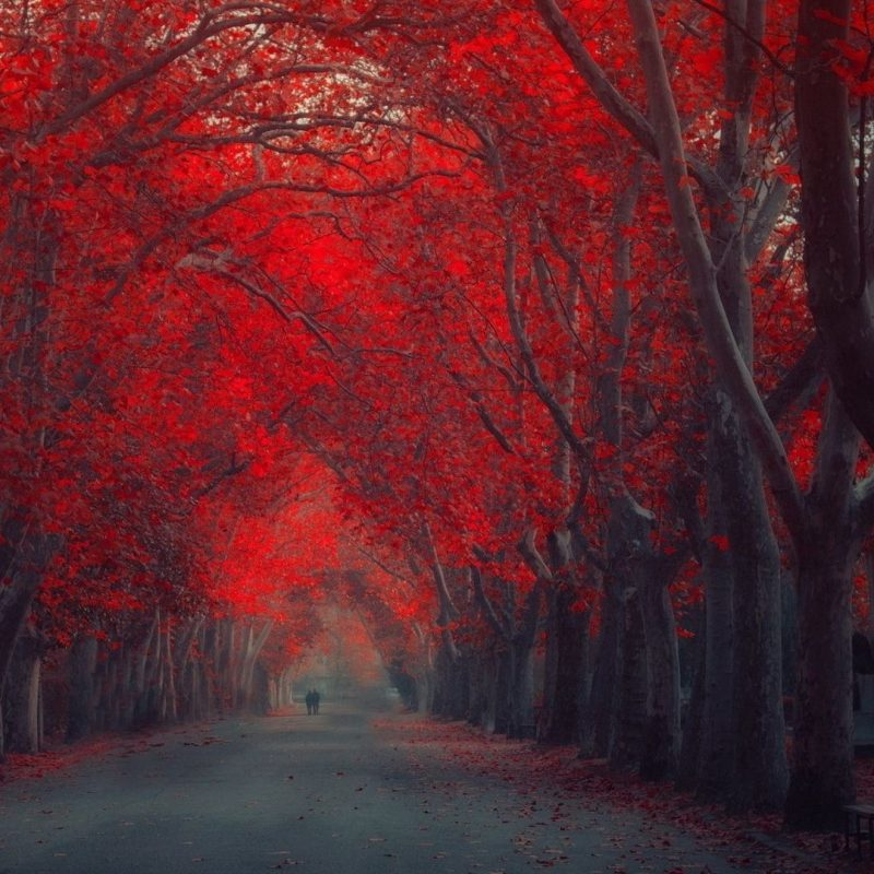 10 New Red Nature Wallpaper Hd FULL HD 1920×1080 For PC Desktop 2018 free download 35 red autumn 800x800