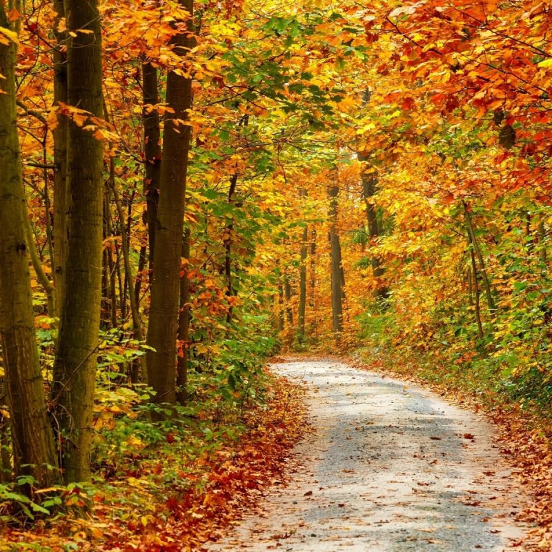 10 Top Autumn Forest Wallpaper Widescreen FULL HD 1080p For PC Desktop 2020 free download 37 desktop images of autumn forest autumn forest wallpapers 1 800x800