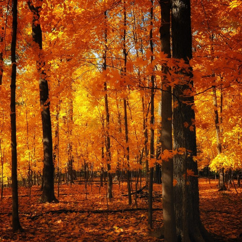10 Best Autumn Forest Wallpaper Hd FULL HD 1920×1080 For PC Desktop 2020 free download 37 desktop images of autumn forest autumn forest wallpapers 800x800