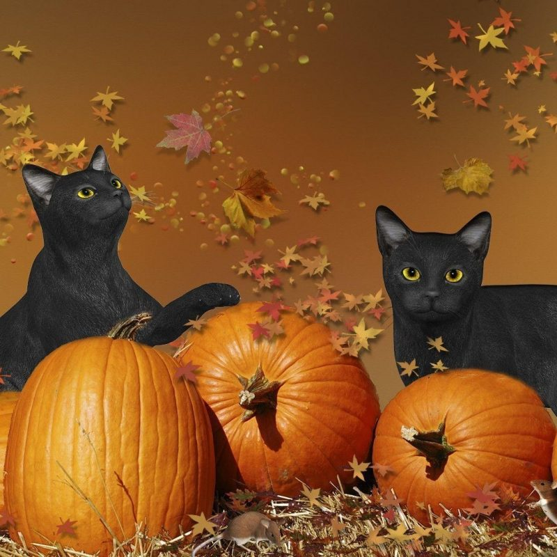 10 Top Cute Cat Halloween Wallpaper FULL HD 1920×1080 For PC Background 2018 free download 375 cute cat halloween wallpaper 800x800