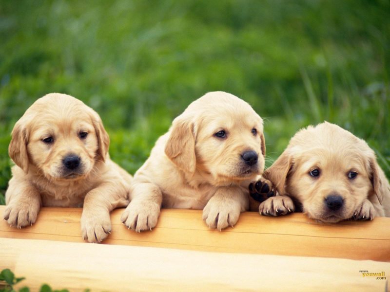 10 Latest 3D Puppy Wallpaper FULL HD 1920×1080 For PC Background 2020 free download 3d dog wallpapers top free 3d dog backgrounds wallpaperaccess 800x600