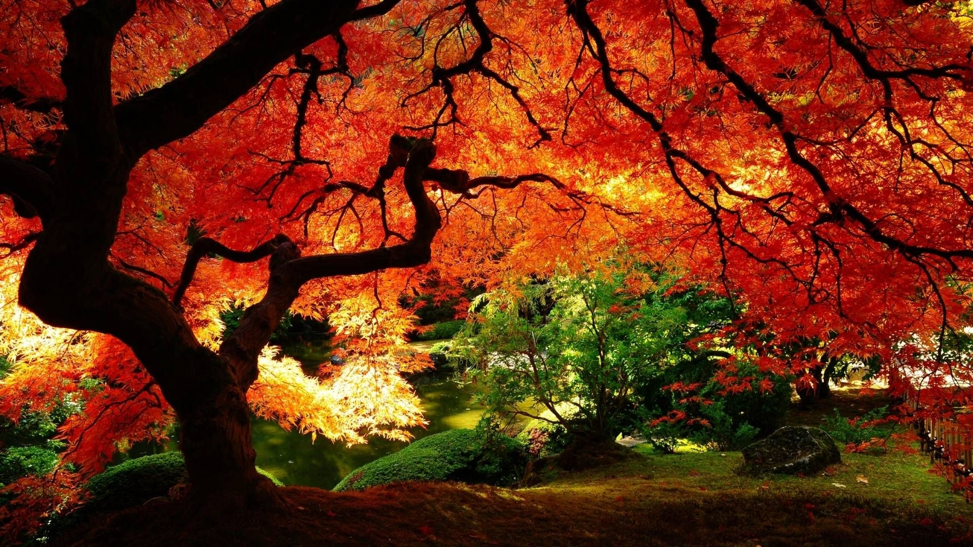 3d fall wallpapers - wallpaper cave | desktop wallpapers | pinterest